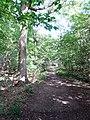Balade en Forêt de Verrières le 20 août 2017 - 045.jpg