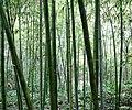 Bamboo 竹林 (5811995218).jpg