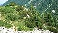 Bansko, Bulgaria - panoramio (80).jpg