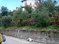 Barga, Province of Lucca, Italy - panoramio - jim walton (47).jpg