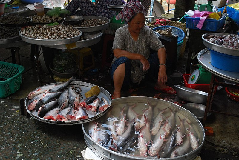 Dine 1 1 what is swai fish for What is pangasius fish