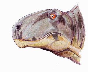 Dimetrodon borealis - Speculative restoration of the head of D. borealis