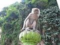 Batu Cave - Macaque crabier.jpg