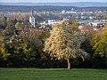 Baumblüte bei Tägerwilen TG (2021).jpg