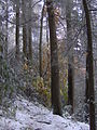 Baxter-creek-old-growth-nc1.jpg