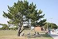 Bay park tree.jpg
