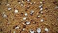 Beach sand and shells by sankar.jpg