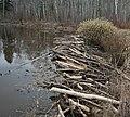 Beaver Dam (3513559421).jpg