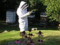 Bee keeping in Praze Gooth, Cadgwith, Cornwall - geograph.org.uk - 447467.jpg