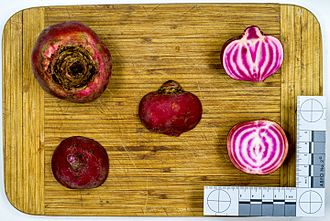 Beetroot - Fruit and cross section, cultivar Chioggia