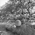 Begraafplaats - Velsen - 20240622 - RCE.jpg