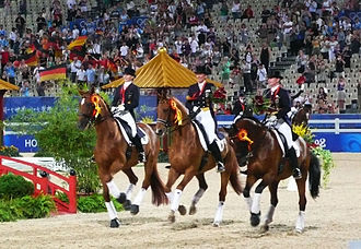 Hanoverian horse - These three Hanoverian geldings (Elvis VA, Bonaparte, and Satchmo) made up the gold medal-winning dressage team at the 2008 Beijing Olympics.