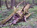 Białowieski Park Narodowy 16.jpg