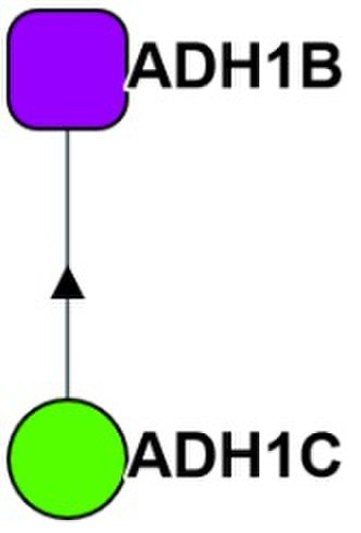 BioPlex - The network of ADH1B, a subunit of alcohol dehydrogenase showing that it is captured only by the bait of ADH1C, another subunit of alcohol dehydrogenase.
