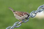Bird 9714 (9566381229) (2).jpg