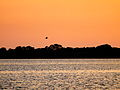Bird fly on sunset.jpg