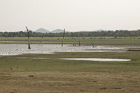 Birds at the Minneriya-Giritale National Park.jpg