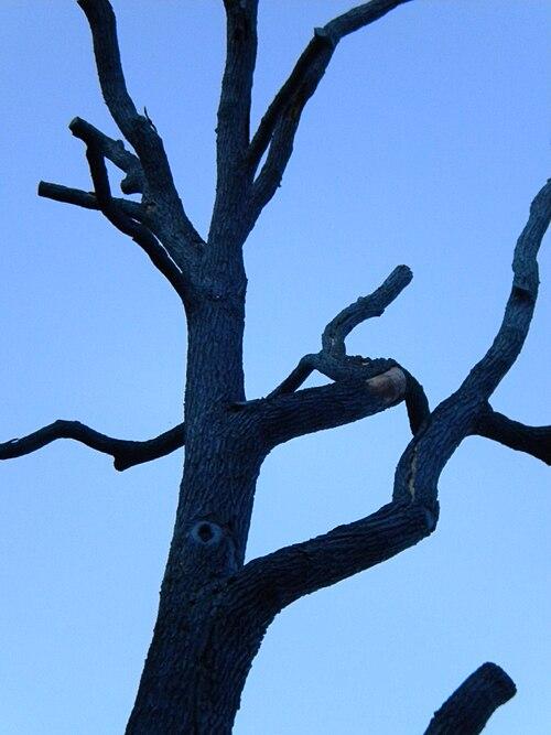 Blauerbaum.jpg