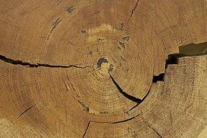 Blok hout met jaarringen - Unknown - 20534006 - RCE.jpg