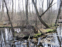 Blue Sources Nature Reserve in Tomaszow Mazowiecki - 36.jpg