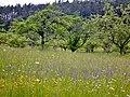 Blumenwiese - panoramio (1).jpg