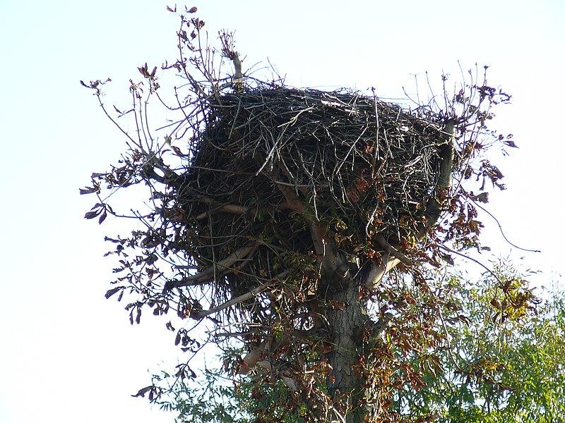 File:Bocianie gniazdo - panoramio (2).jpg