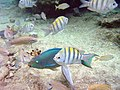 Bonaire M0010563 (2085287142).jpg