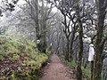 Bosque en 4 Palos.jpg
