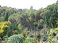 Botanic gardens Spain Girona Blanes.JPG