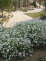 Botanical garden of Barcelona - 2004 - 12.JPG
