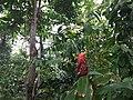 Botanische tuinen Utrecht 33.jpg