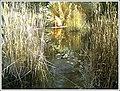 Botanischer Garten Freiburg - Botany Photography - panoramio (13).jpg