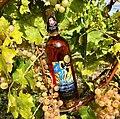 Bouteille de rosé dans les vignes du Château de Vullierens en septembre 2018.jpg