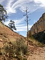 Boynton Canyon Trail, Sedona, Arizona - panoramio (94).jpg
