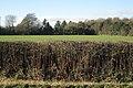 Bracken stems in a hedge - geograph.org.uk - 2192280.jpg