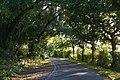 Brind Lane at the turning off Wood Lane (geograph 3668976).jpg