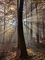 Bruderwald-Herbst-026375.jpg