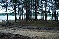 Brzóza Królewska - panoramio (14).jpg