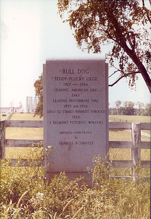 Bull Dog (horse) - Bull Dog's burial place at Coldstream Farm