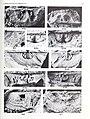 Bulletin of the British Museum (Natural History). Geology. (1989) (19823952014).jpg