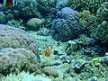 Bunaken Marine Park (10).JPG