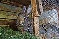 Bunny Family (256157763).jpeg