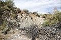 Butcher Jones Trail to Pinter's Point Loop, Tonto National Park, Saguaro Lake, Ft. McDowell, AZ - panoramio (172).jpg