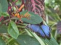 Butterfly and orange flower (5534378680).jpg