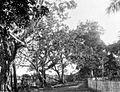 COLLECTIE TROPENMUSEUM Poelaumadjang de enige permanente (Maleisische) kampong binnen het merengebied in de Wester Afdeling van Borneo TMnr 10004440.jpg