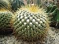 Cactus - panoramio (7).jpg