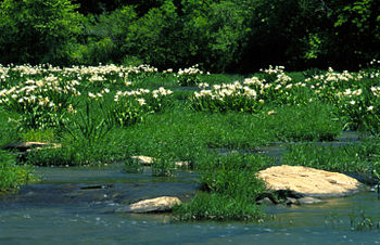 Cahaba River National Wildlife Refuge