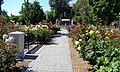 California State Capitol Park World Peace Rose Garden 6.jpg