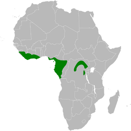 Calyptocichla serina distribution map.png
