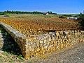 Campo Lavrado (1659021152).jpg